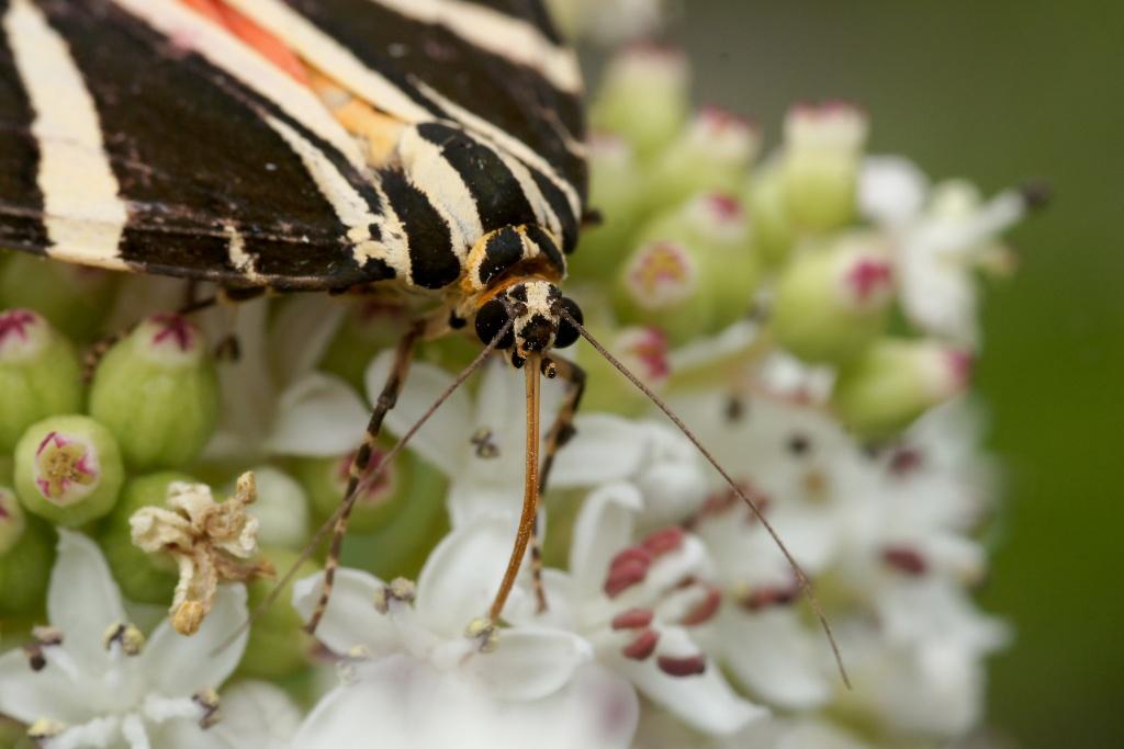 Insectes et papillons - Page 5 Dsc04310