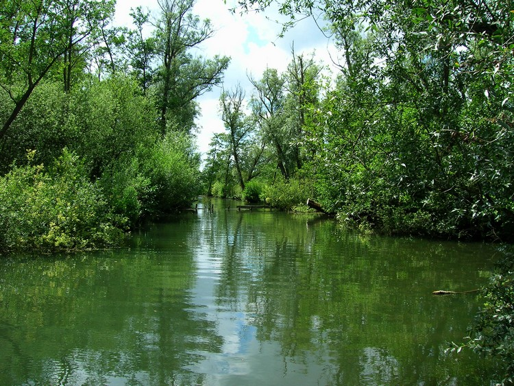 Parc d'isle à Saint Quentin Etangs10