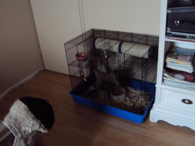 Vend cage (35) bretagne+covoit Dsc01710