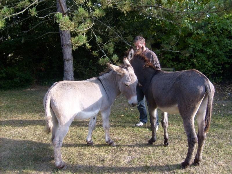 KENYA et BAMBOO - Anes (2007)  adoptés en juillet 2009 S6300014