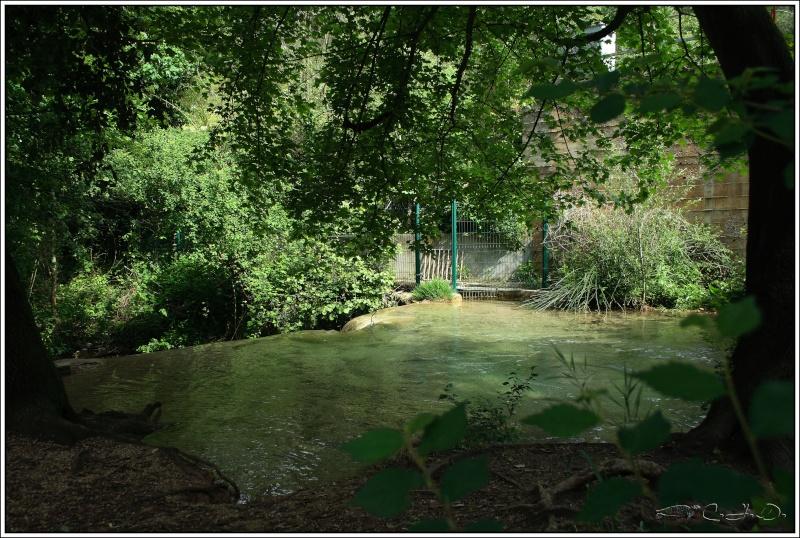 Vallée de St Pons près de Gémenos (13) Img_9410