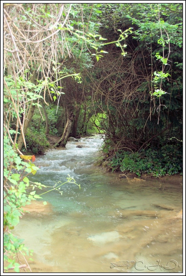 Vallée de St Pons près de Gémenos (13) Img_9411