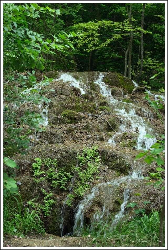 Vallée de St Pons près de Gémenos (13) Img_9511