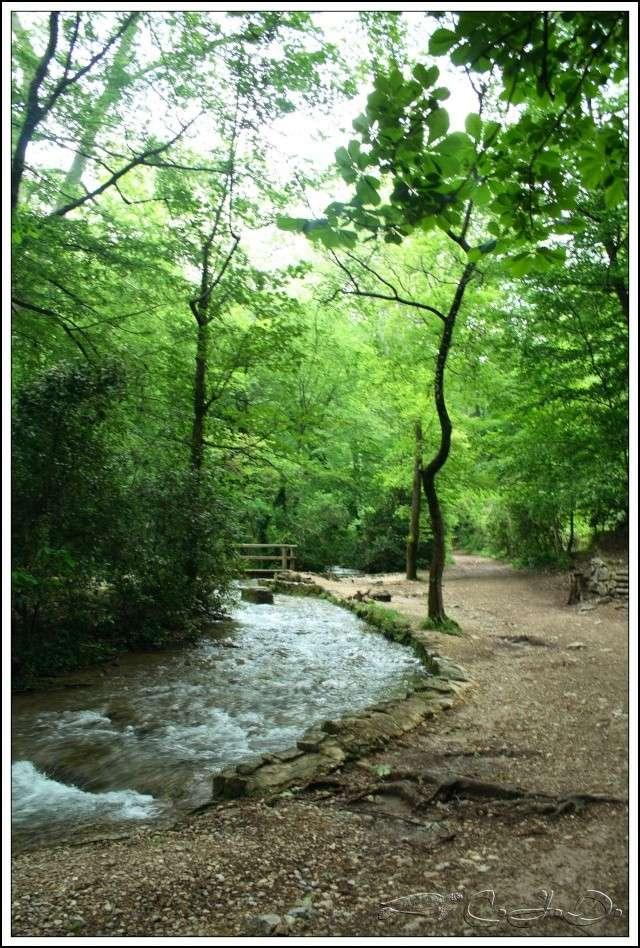 Vallée de St Pons près de Gémenos (13) Img_9512