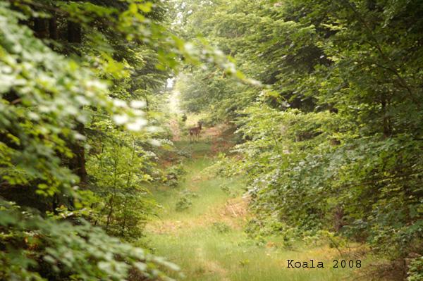 Mon coin de nature préféré. 17-au_10
