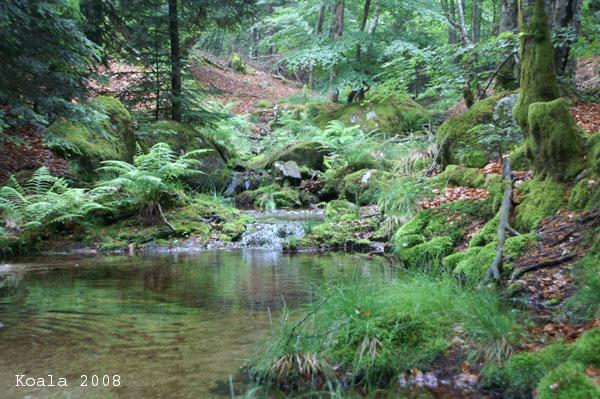 Mon coin de nature préféré. 9-la_r10