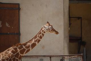 Réserve de Sigean Girafe10