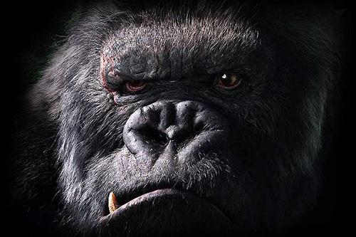 Foro motero de amigos del Anís del mono