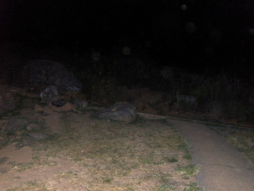 Any Gostie pics,orbs or unexplainable pictures Devils10