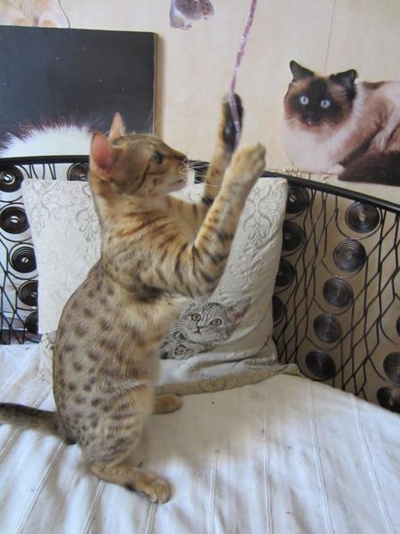 E'Sethi Accuente, le chaton voyageur - Page 8 Galadr11