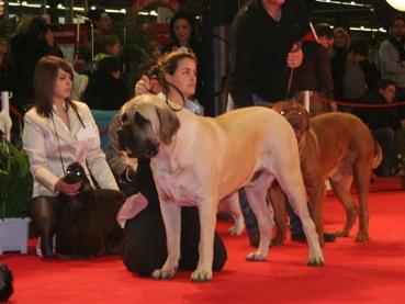 Paris Dog Show 8 et 9 janvier 2011 Img_7214