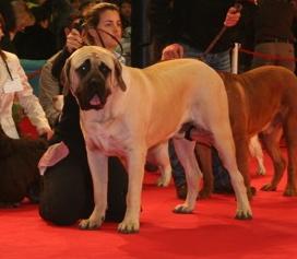 Paris Dog Show 8 et 9 janvier 2011 Img_7215