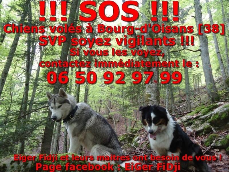 Partage Chiens volés à Bourg d'oisans G96m12