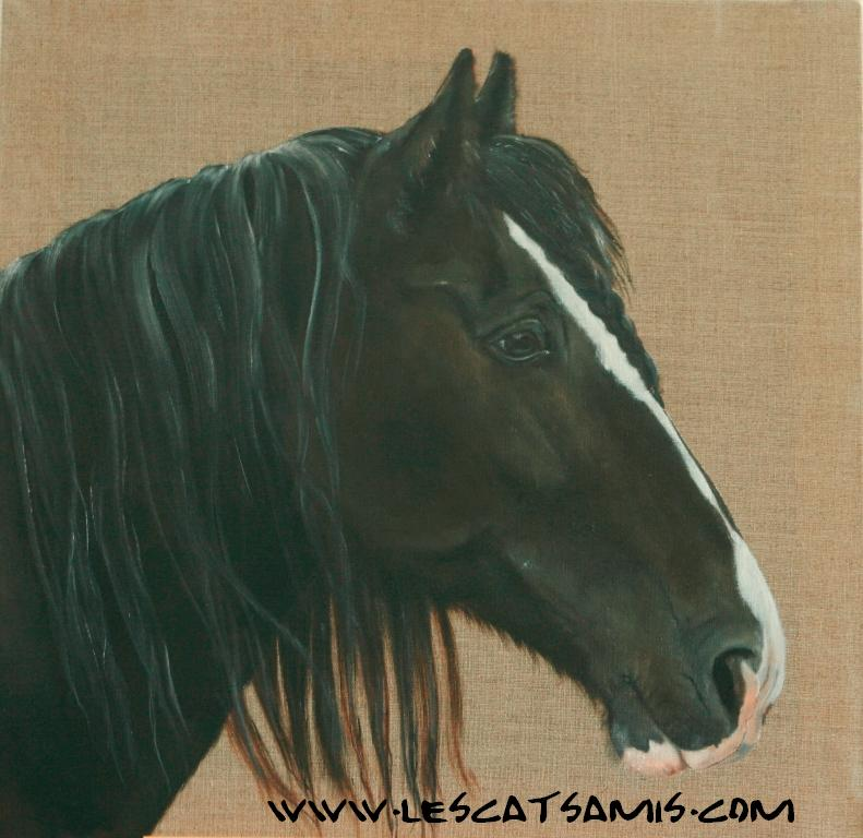 Cathy peintre animalier - Page 8 John_10