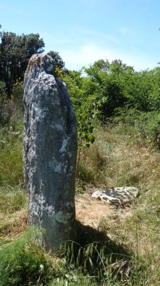 mégalithes en Languedoc-Roussillon P1090013