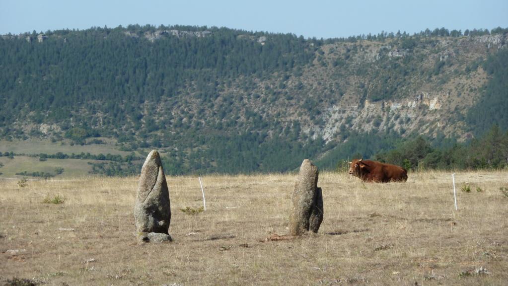 mégalithes en Languedoc-Roussillon P1110110