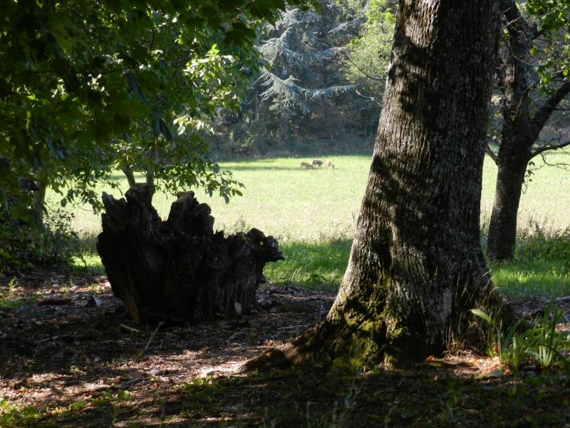 En Ardèche aussi les chevreuils nous rendent visite Marcla13