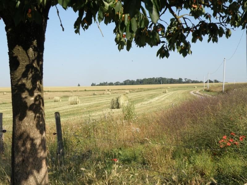 Mayenne torride de juin Vauvar10