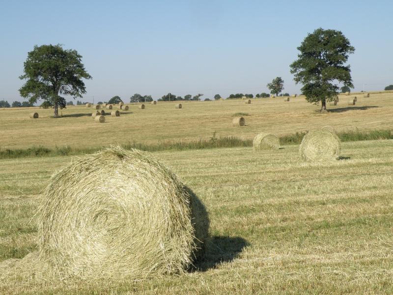 Mayenne torride de juin Vauvar11