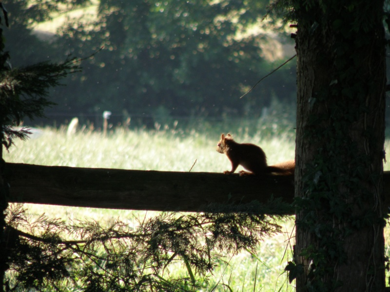 Mayenne torride de juin Vauvar22