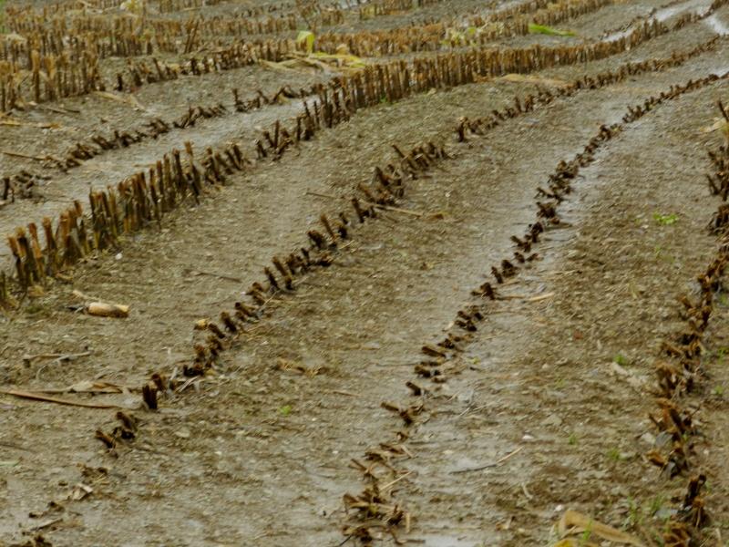 Octobre 2012, la pluie transforme le paysage  Vauvar34