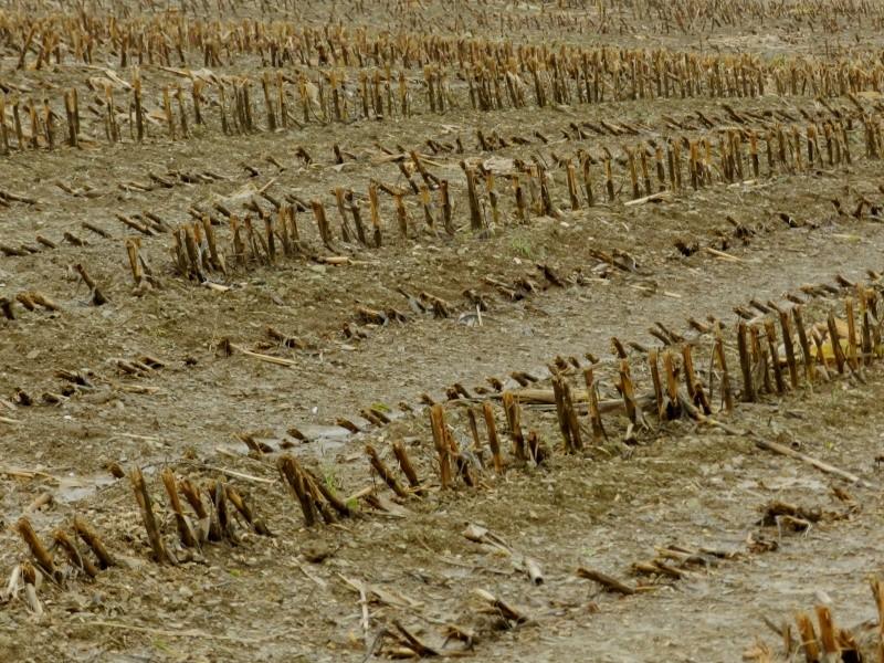 Octobre 2012, la pluie transforme le paysage  Vauvar35