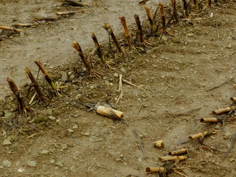 Octobre 2012, la pluie transforme le paysage  Vauvar36