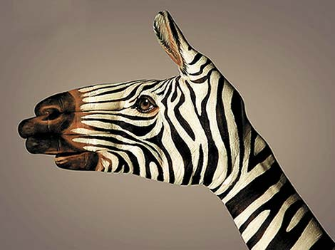 rayures de zèbre Zebre10