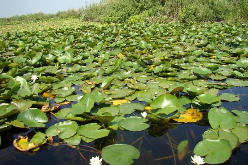 Delta Dunarii -iulie 2010 Delta_12