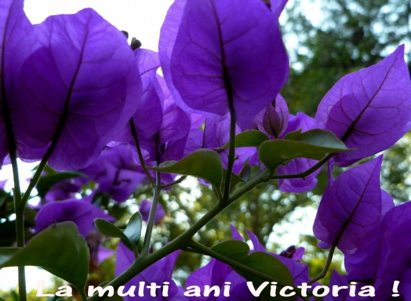 La Multi Ani ! Victor10