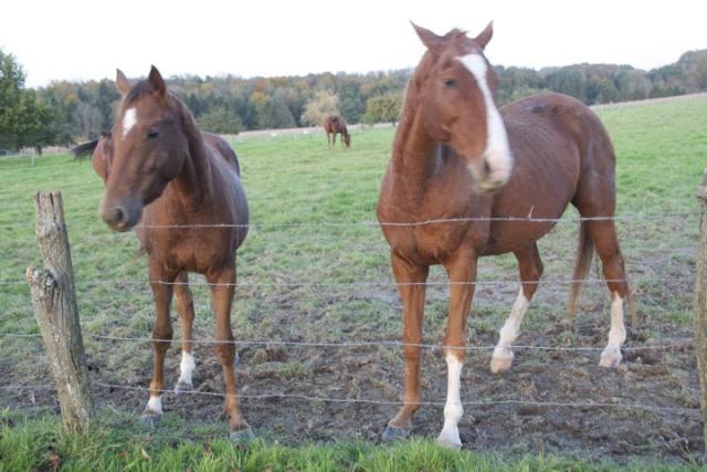 EXTREME URGENCE 8 chevaux _mg_0011