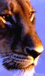 """Avatar """"Lions"""" en Libre-Service Sans_t42"""