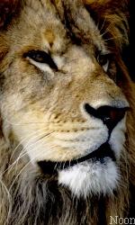 """Avatar """"Lions"""" en Libre-Service Sans_t44"""
