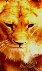 """Avatar """"Lions"""" en Libre-Service Sans_t45"""