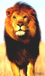 """Avatar """"Lions"""" en Libre-Service Sans_t46"""