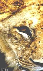 """Avatar """"Lions"""" en Libre-Service Sans_t47"""