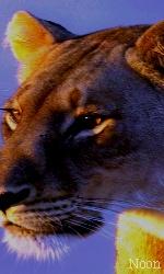 """Avatar """"Lions"""" en Libre-Service Sans_t48"""