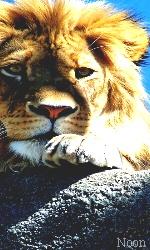 """Avatar """"Lions"""" en Libre-Service Sans_t50"""