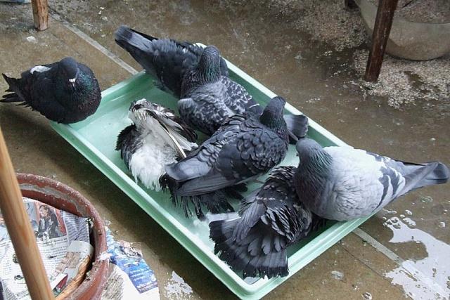 How many pijjies fit into a bathtub? 0101x016