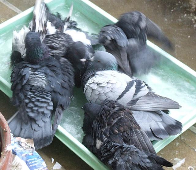 How many pijjies fit into a bathtub? 0101x025