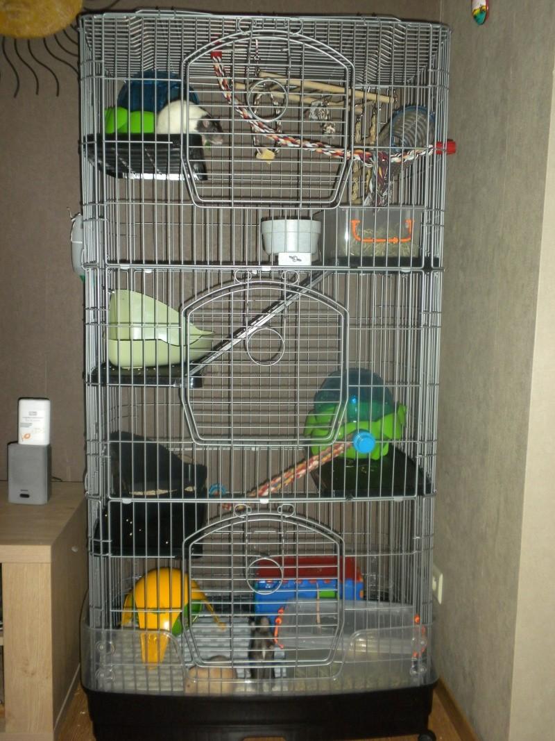 Vends cage 75 x 50 x 157cm  Cage_110