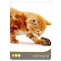 Oracle des chats L-orac11