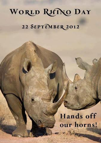 World Rhino Day Rhino11