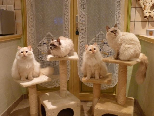 concours photos: le chat en groupe P1030920