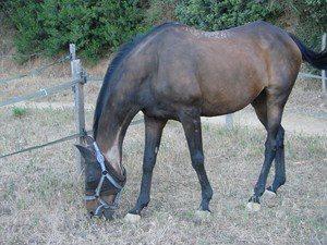 L'espérance de vie du cheval domestique - Page 3 Masmde10