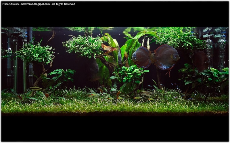 Freshwater Aquascaping Pvd20010