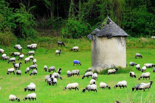 l'Europe Mouton10