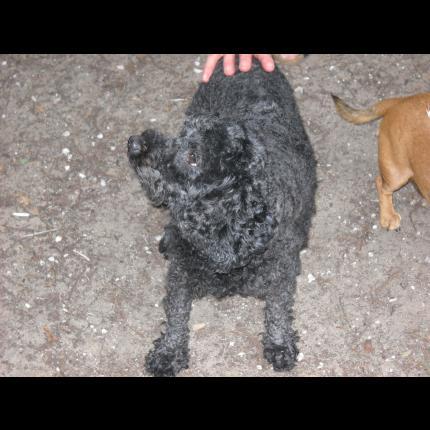 femelle noire,non identifiée,trouvée 17 10673_10