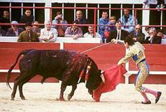 Catalogna abolisce la corrida Il divieto scatterà a partire dal 2012 Bullfi10