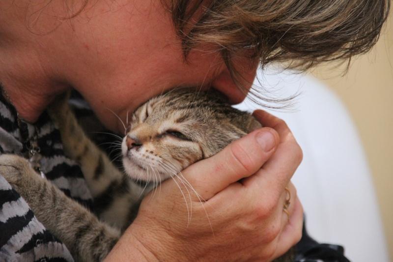 Chatons a adopter Iannka10